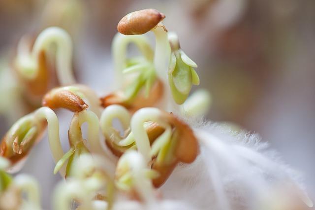 klíčící semena.jpg