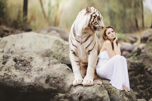 žena pózující s bílým tygrem